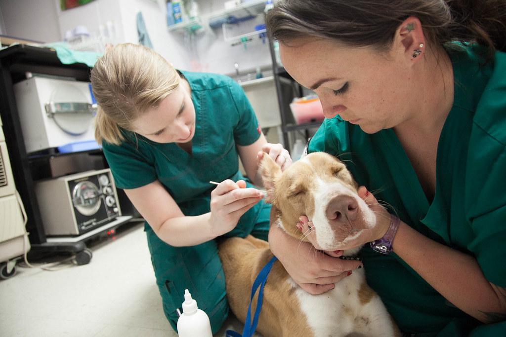 Vet Tech Schools – The Growing Requirement Of Veterinary Technicians