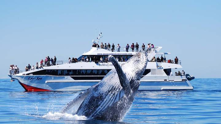 The 6 Best Destinations in the World for Whale Watching