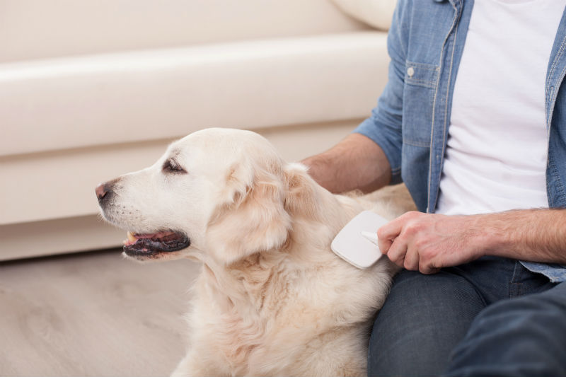 Over the top Dog Shedding Advice